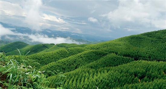 定南县林业局定南县第二水源保护涵养林项目