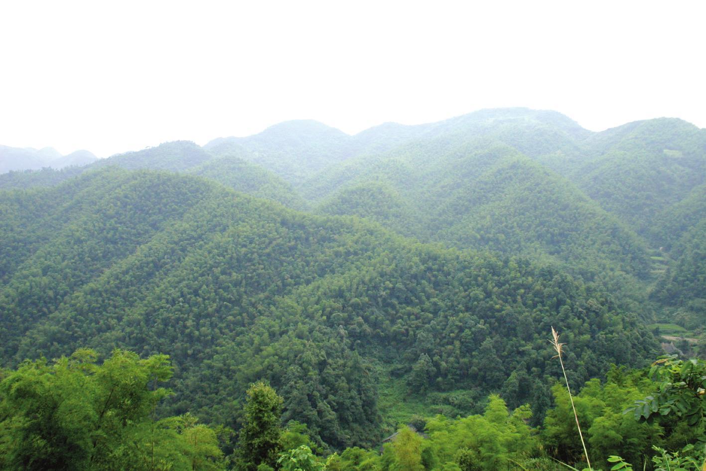 定南县林业局定南县2018-2019年度低质低效林改造项目